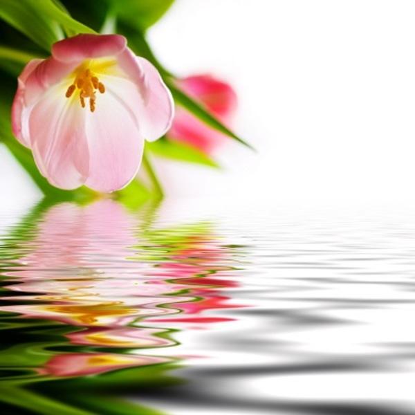 フローラルノート中心の花*アロマブレンド香調
