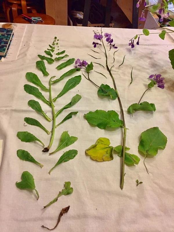 村上志緒先生*植物ハーブからのメッセージ