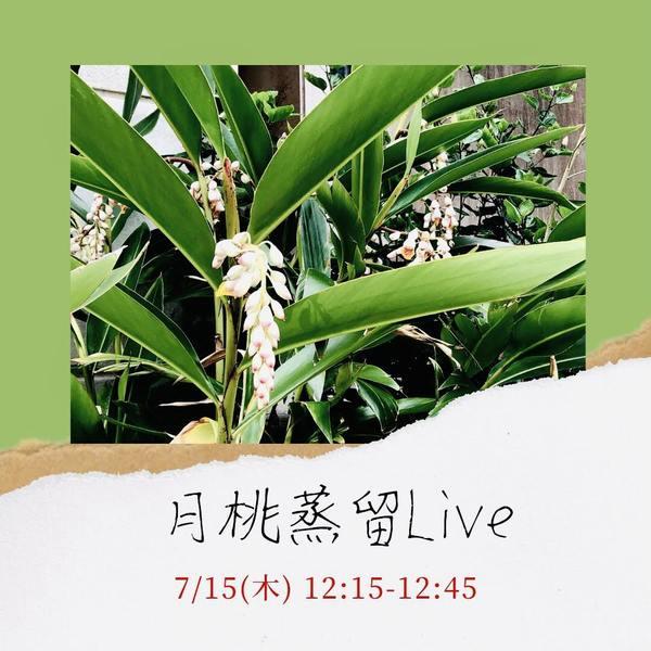 月桃【花】蒸留シーンを生配信*7/15の12:15